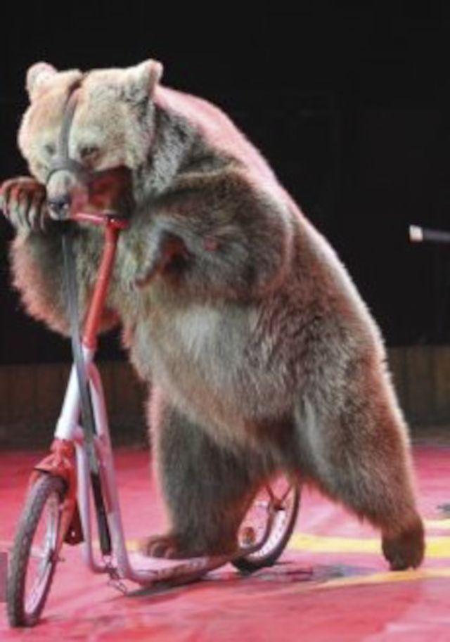 Tierquälerei Zirkus