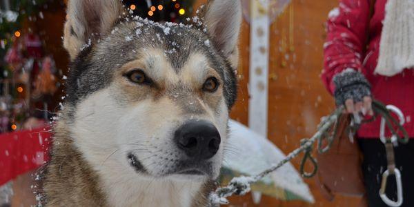 Hundstage im Winter