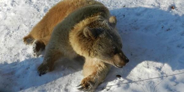 Winter im Bärenpark Worbis