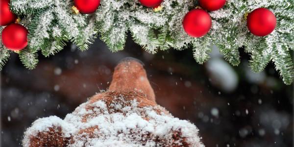 Bärsinnliches Weihnachtsfest im Bärenpark Schwarzwald