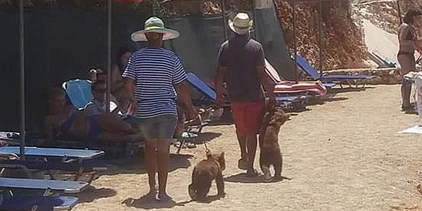 Jungbären in Albanien