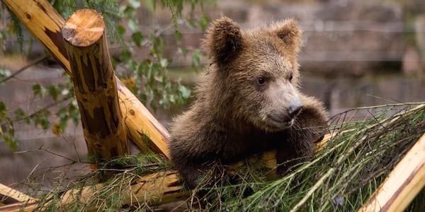 Kleinbären aus Albanien gerettet
