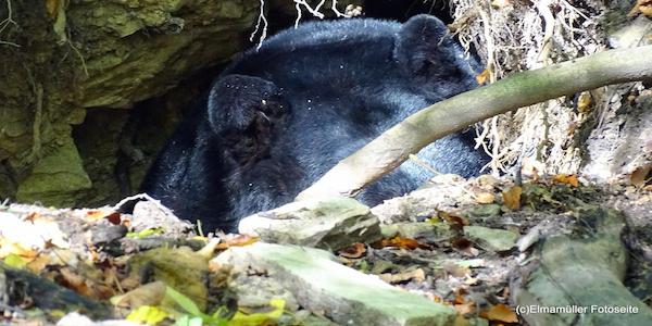 Bärenhöhle