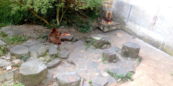 Bären Cesky Krumlov