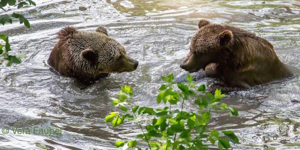 2018-06-18-Bären-Wasser