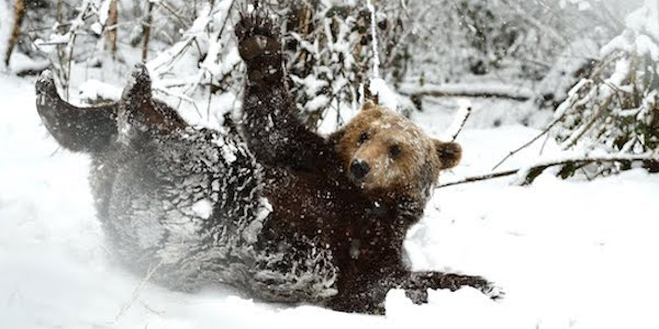 2019-02-14-Winterbilder