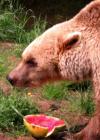 FRANCA und die Wassermelone