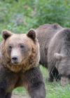 Bären im Grünen